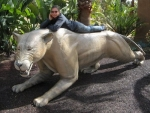 2 Giant Cats