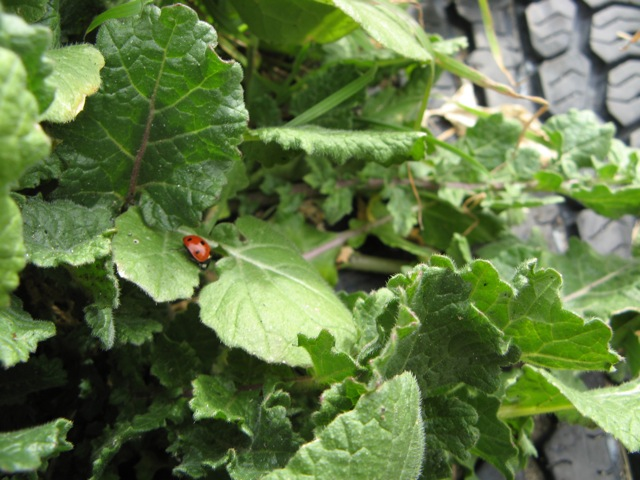 Lady bug opportunities