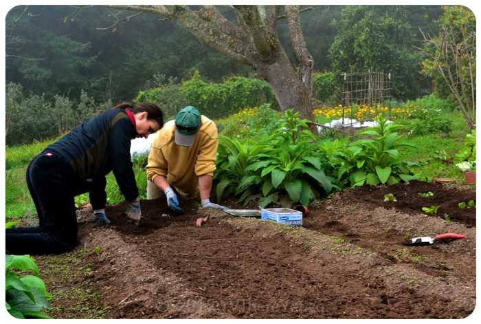 Sowing in the garden MMC